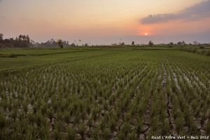 Raid l'Arbre Vert Amazones Bali